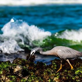 Animals&Birds-29.jpg