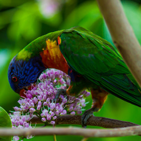 Animals&Birds-2.jpg