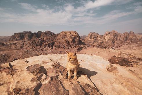 orange-tabby-cat-sitting-on-rock-3258241