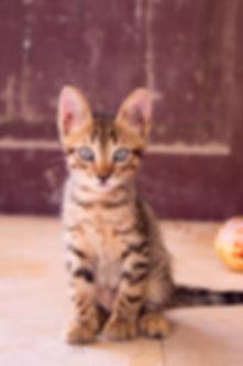 closeup-up-photography-of-dragon-li-kitt
