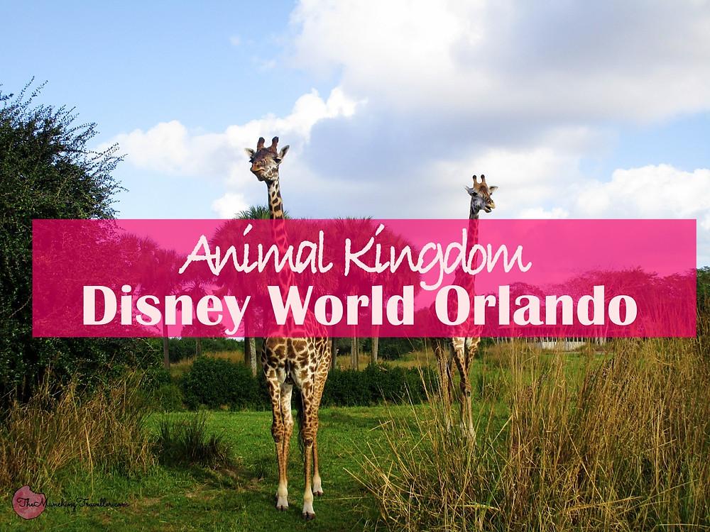 Animal Kingdom, Disney World Orlando