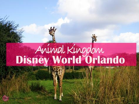 Best part of Disney's Animal Kingdom at Disneyworld Orlando!