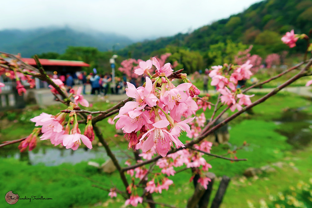 When to head to Yangmingshan, Taipei, Taiwan?