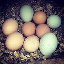 farm fresh local eggs