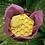 Thumbnail: Kpangnan Butter Lotion Stone