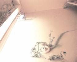 """mimetic slug"" (2005)"