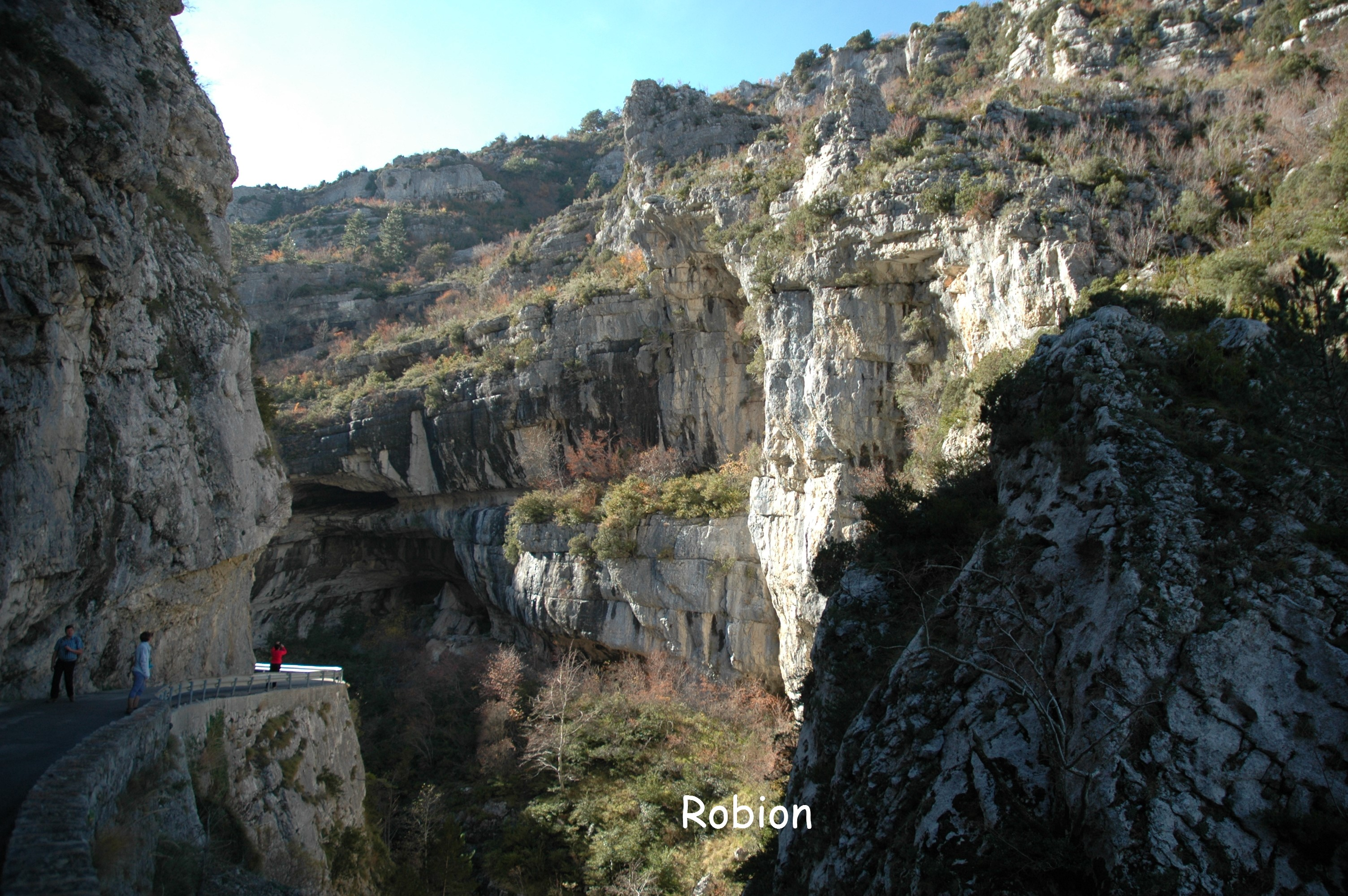 1-Robion