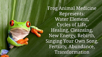 shaman michelle martin kambo ceremony amazon www.MichelleIMartin.com Frog-Animal-Medicine-MotherHouse-of-the-