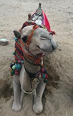 camel egypt shaman www.michelleimartin.com