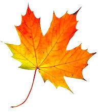 fall-leaves-016.jpg