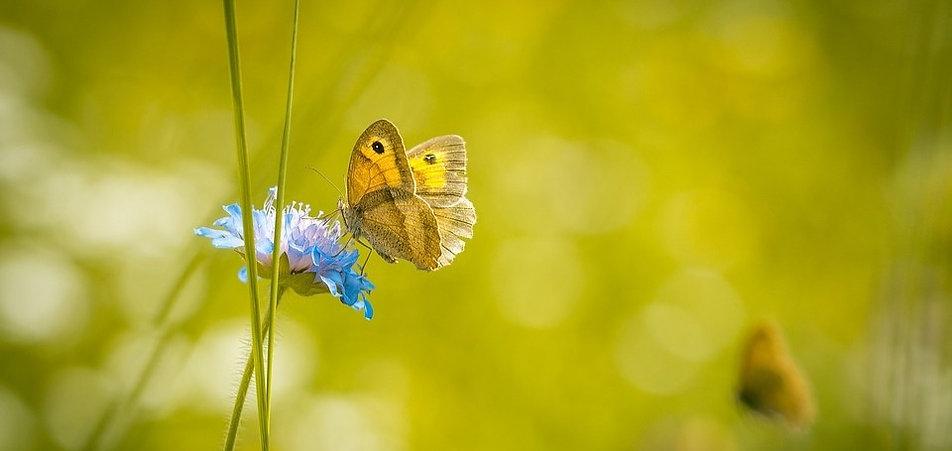 Naturopathe / traitement naturel des allergies 42600 Montbrison- 42110 Feurs