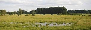 rs48236_natte_zomerweiden_2008_schulensb