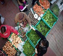Vegetable farmer at the market