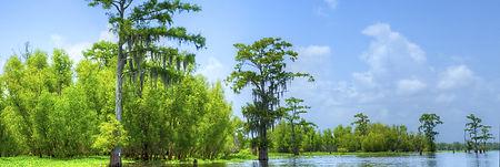 swamp jpg.jpg