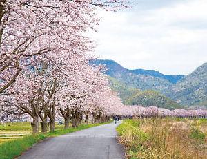 seasons_spring.jpg
