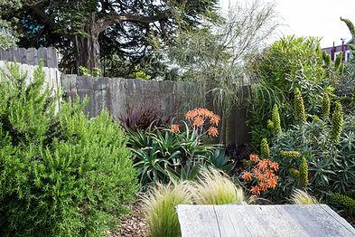 general store san francisco, drought tolerant garden