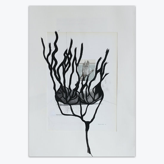 Susannah Stark / Peace kelp / Collage and ink drawing on paper
