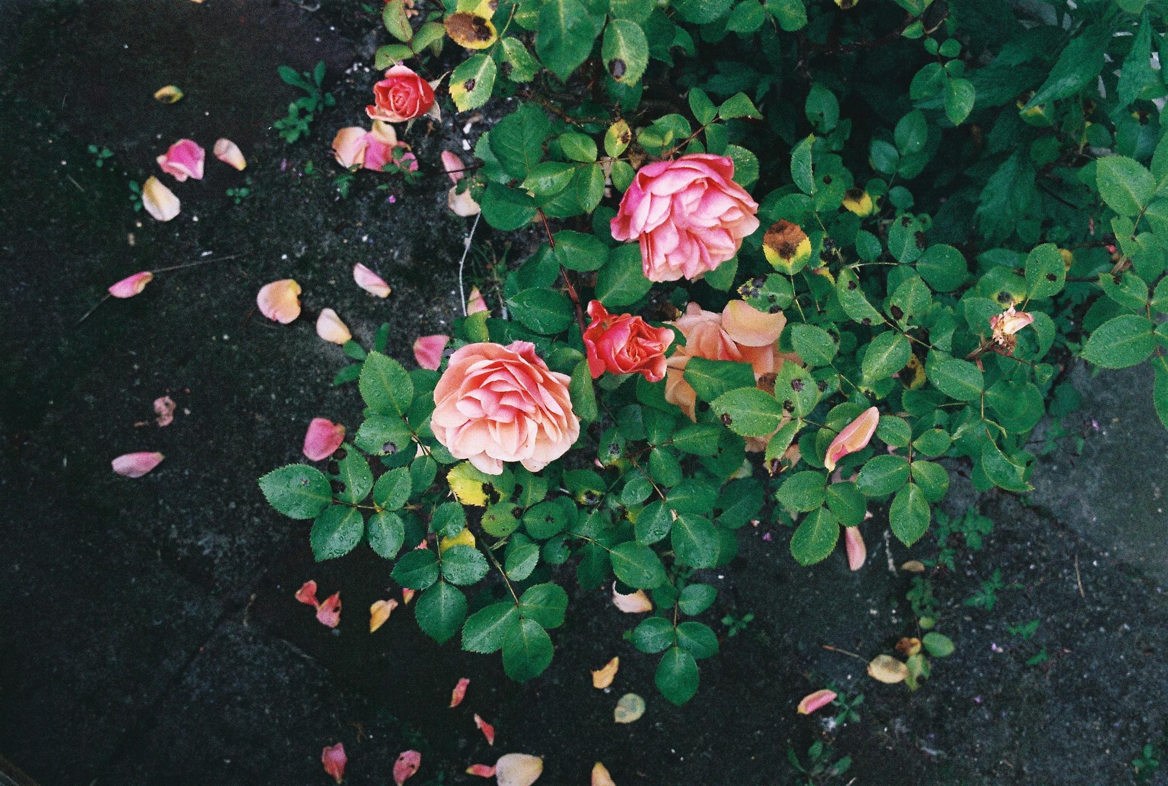 bloem1.