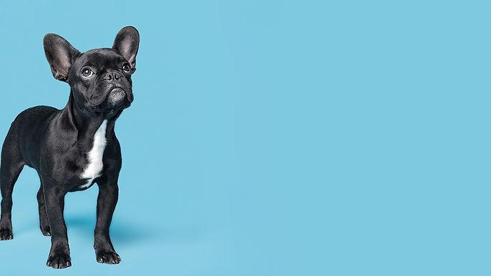 Dog%20on%20Blue_edited.jpg