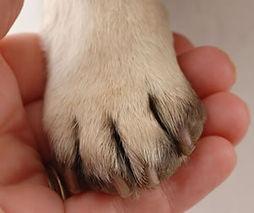 trimming-dog-nails.jpg