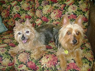 Sydney & Bailey adopted 2010