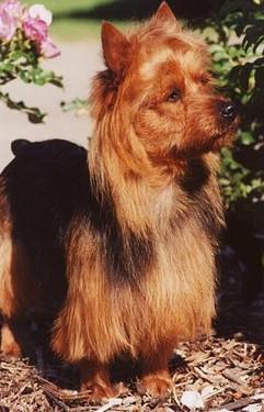 breed2.jpg