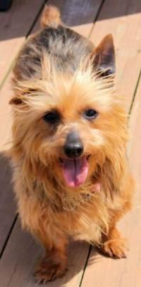 Sunny adopted May 2011