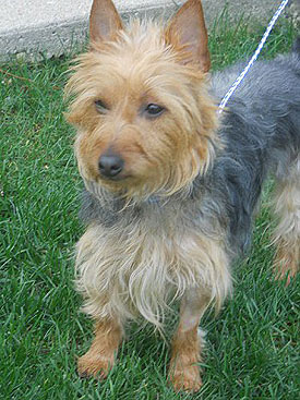 Coco adopted November 2011
