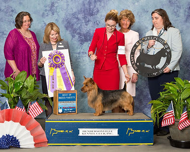 About | Temora Kennels | Breeding Program | Australian Terriers | Good Natured | AKC Breeder of Merit | Milwaukee | Hudson WI