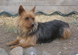 Jessie adopted June 2011
