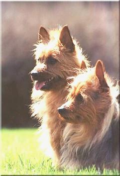 Abe&Piper.jpg