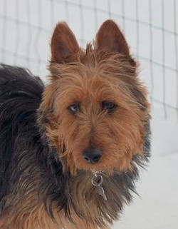 Sammie adopted January 2010