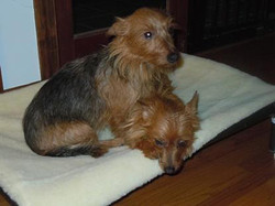 Peanut & Rosie adopted October 2012