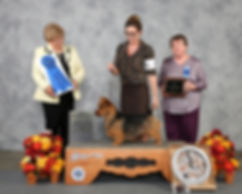 Bacon_best in terrier show 1062017.jpg
