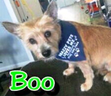 In Memory of Boo
