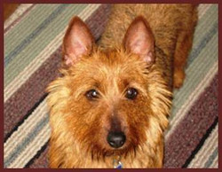 Sadie Jane adopted November 2009