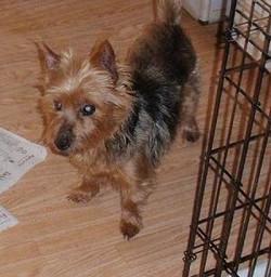 Buddy adopted February 2010