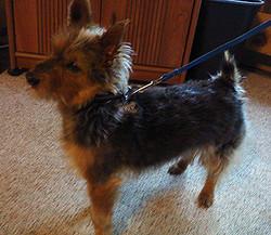 Sidney adopted December 2014