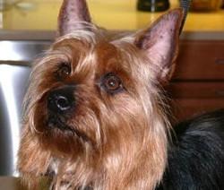 Jamey adopted February 2009
