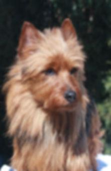 Samsonwitner2008.jpg