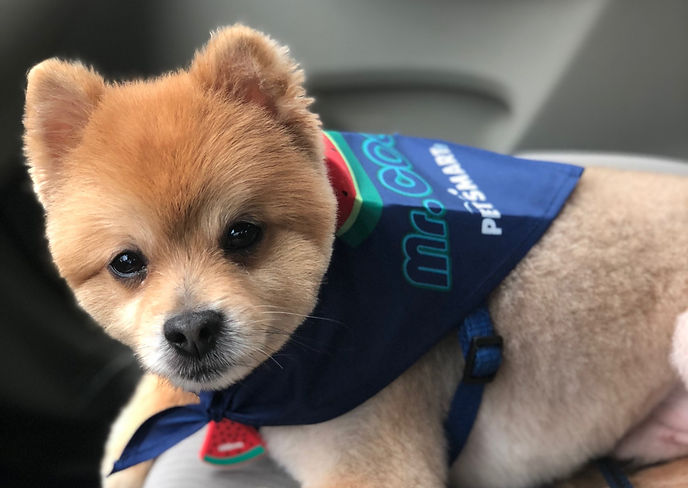 Close up of dog | therapy for women | online therapy in Texas | online therapist in Texas | online anxiety treatment | online depression treatment | counseling practice near me |
