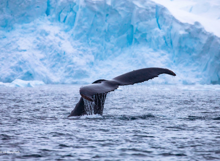 The Antarctic's deglacial evolution offers new climate change insights
