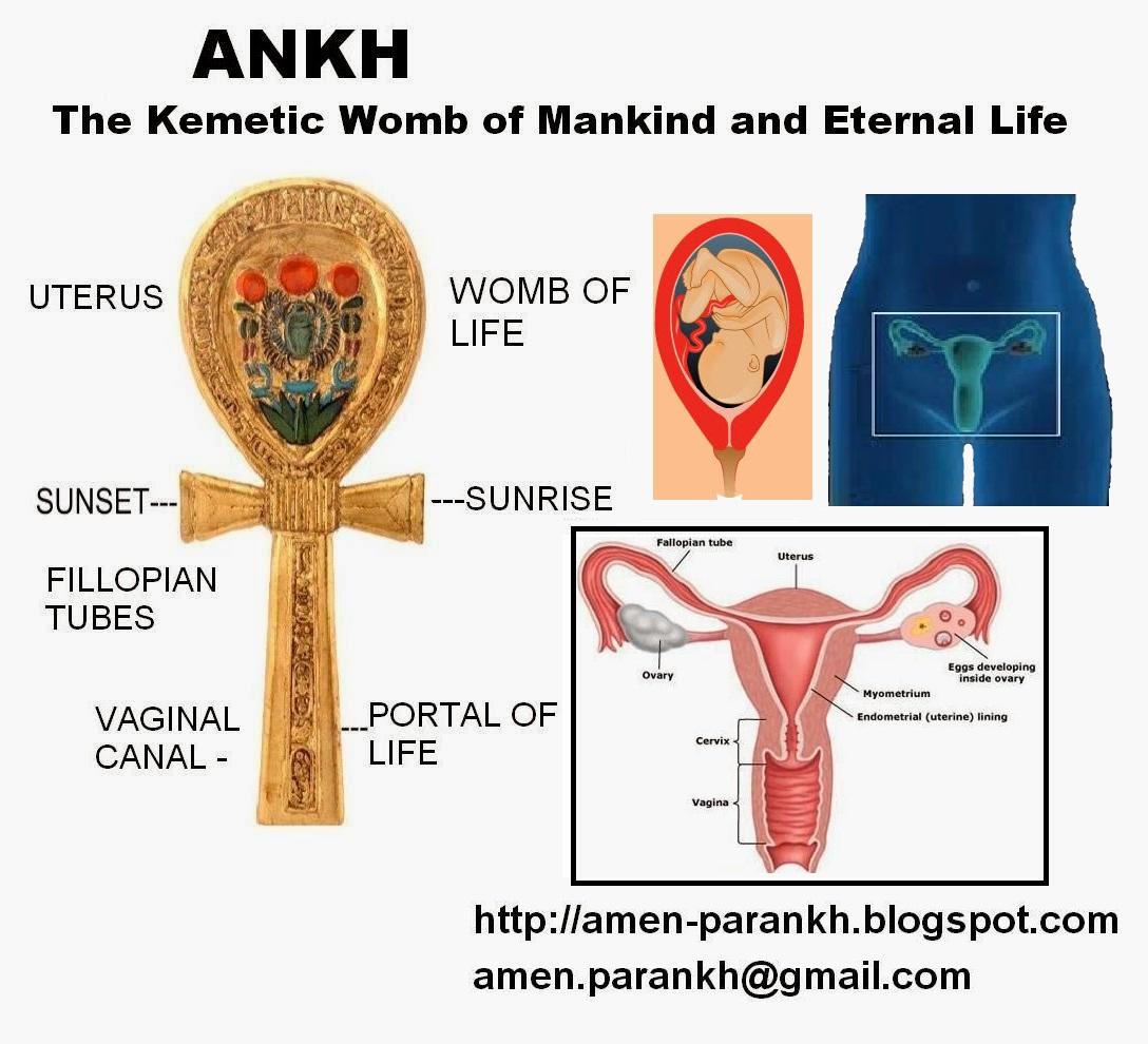 life womb3