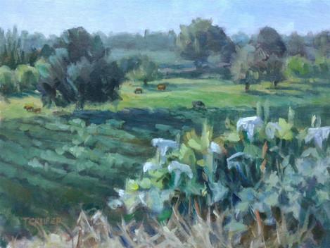 "Tamara Keiper (Waterford), Vineyard Vista with Cattle, 2020 Oil painting, 9"" x 12"" $1,200"