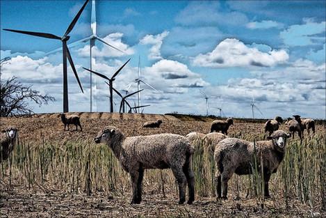 "Anna Barber (Ripon), Delta Sheep Farm, 2020 Digital photo art, 24"" x 34"" $450"