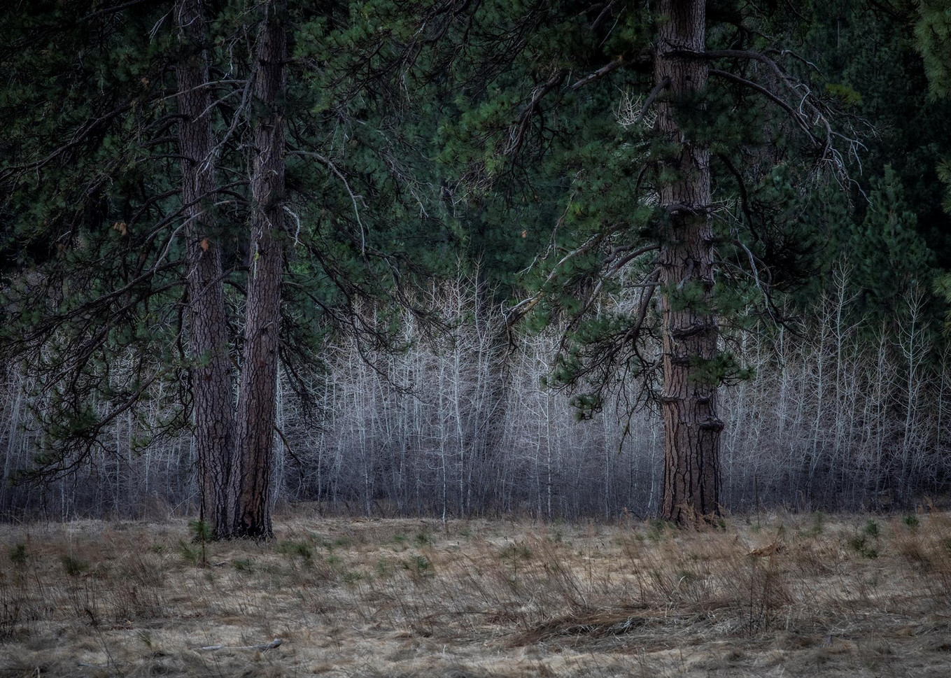 """Susan Conner (Altaville) Winter's Rest, 2020 Honorable Mention Photograph printed on metal 30"""" x 20"""" $350"""