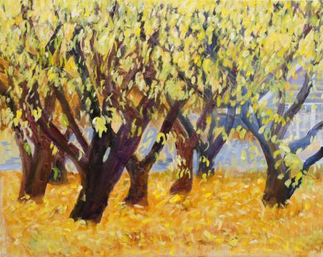 "Sally Ruddy (Waterford), Hurbert's Peach Trees, 2019 Oil on canvas, 21"" x 25"" $1,100"