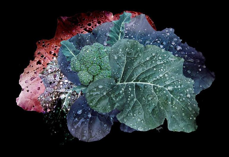 "Anna Barber (Ripon), Broccoli, 2020 Digital photo art, 16"" x 20"" $200"