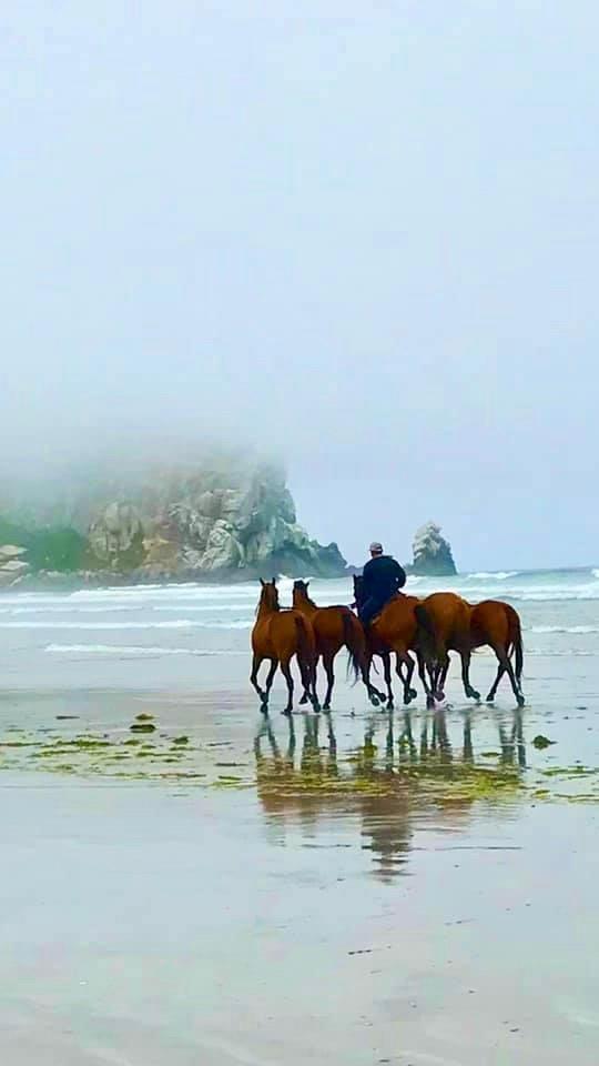 """Evelyn Cooper (Escalon) A Ride on the Beach, 2020 Photograph 8"""" x 10"""" $300"""