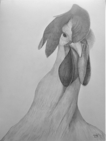 """Michael Souza (Turlock), Rooster Booster, 2019 Graphite on paper, 18"""" x 24"""" $450"""